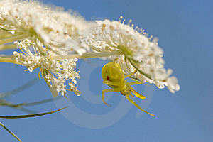 Crab Spider Stock Photography - Image: 16760222