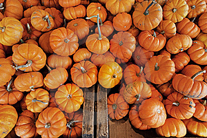 Mini Pumpkins Stock Images - Image: 16760724