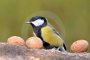 Great Tit With Nuts Stock Image - Image: 16764741