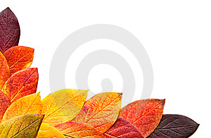 Autumnal Leaves. Stock Images - Image: 16767494