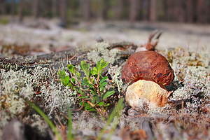 Cep In Nature Stock Image - Image: 16781431