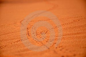 Animal Traces Royalty Free Stock Images - Image: 16781829