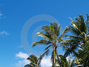 Top Branches Of Palm Trees With Copy Space Royalty Free Stock Image - Image: 16784936
