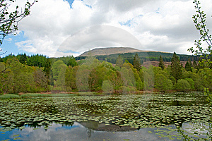Lilys And The Loch Royalty Free Stock Photography - Image: 16788557