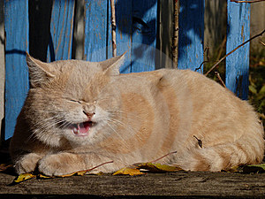 Dissatisfied Cat Royalty Free Stock Photo - Image: 16796675