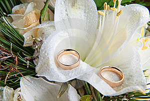 Rings On Orchid Stock Images - Image: 16799534