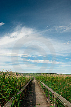 Boardwalk In Marsh Royalty Free Stock Images - Image: 16804869