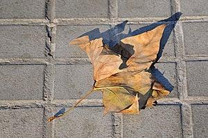 сухие листья Стоковое Изображение - изображение: 16806191