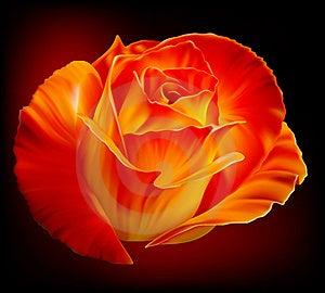 Photo-realistic Rose Stock Photography - Image: 16809932