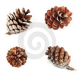 Pine Cones Royalty Free Stock Images - Image: 16809989