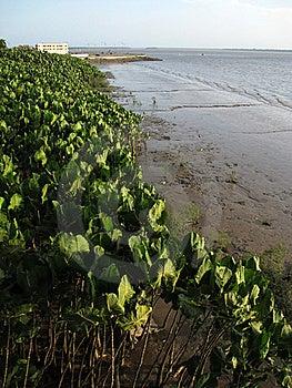 Vegetation Bay Stock Photos - Image: 16815333