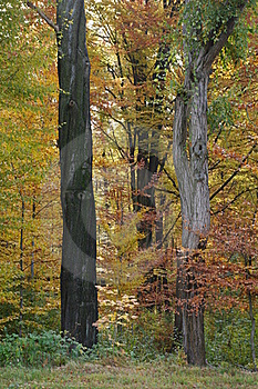 Magic Autumn Royalty Free Stock Photos - Image: 16817108