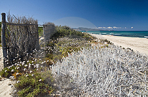 Sand And Flowers In A Sardinian Beach Stock Photo - Image: 16818540