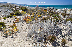 Sand And Flowers In A Sardinian Beach Stock Images - Image: 16818644