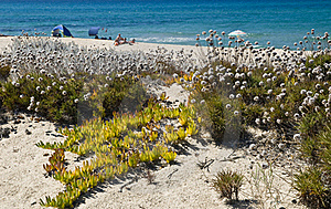 Sand And Flowers In A Sardinian Beach Stock Photos - Image: 16818743