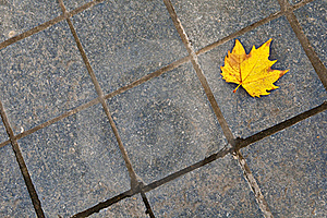 Dry Leaf Stock Images - Image: 16823684