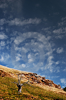 Old Dead Tree Stock Image - Image: 16827111
