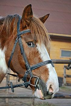 Horse Stock Image - Image: 16827941