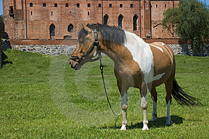 Horse With The Castle In The Background Stock Image - Image: 16830631