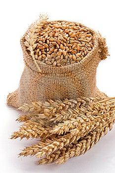 Wheat Royalty Free Stock Image - Image: 16831926