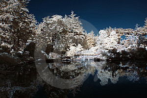 Infrared Pond With Trees Royalty Free Stock Photo - Image: 16834375