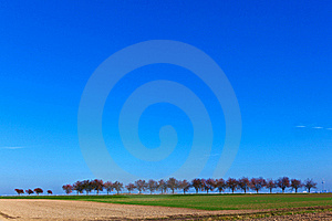Acre And Tree In Afternoon Light Stock Images - Image: 16840274