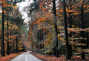 Autumn Road Royalty Free Stock Photos - Image: 16845178