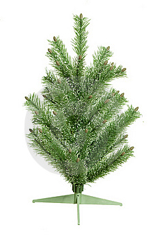 Fir-tree Stock Image - Image: 16849521