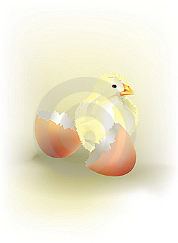 A Newborn Chick Stock Images - Image: 16850504