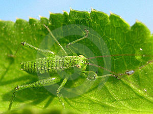 Grasshopper Stock Photos - Image: 16884493