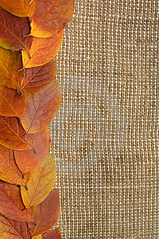 Autumn Leaves Over Burlap Background Royalty Free Stock Photos - Image: 16886058