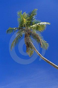 Palm Tree Stock Photography - Image: 16889592