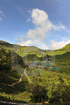Tea Plantation Royalty Free Stock Photography - Image: 16914937