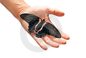 Black And Red Butterfly Stock Images - Image: 16918444