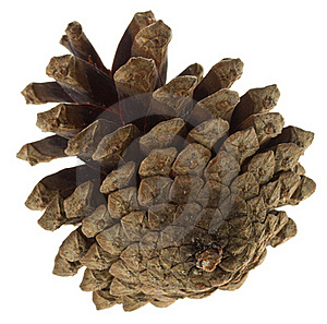 Big Pine Cone Royalty Free Stock Images - Image: 16927079