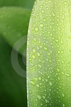 Water Droplets On Leaf 1 Stock Photo - Image: 16929130