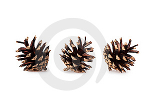 Pine Cones Royalty Free Stock Photos - Image: 16951578