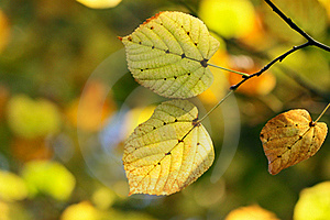 Autumn, Colorful Leaves Royalty Free Stock Photo - Image: 16953225