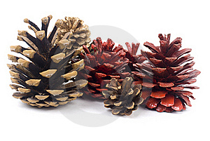 Pine Cones Royalty Free Stock Photography - Image: 16956277