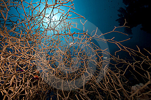 Noded Coral And Fish In The Red Sea. Stock Image - Image: 16961071