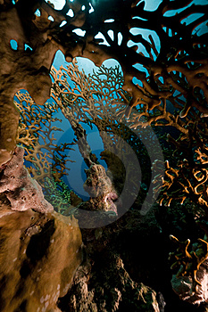 Net Fire Coral And Fish  Stock Images - Image: 16961194
