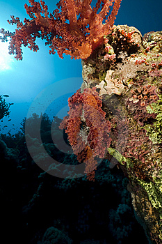 Coral And Fish In The Red Sea. Royalty Free Stock Photos - Image: 16961328