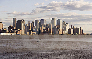 Downtown NYC With Seagull Royalty Free Stock Images - Image: 16964609