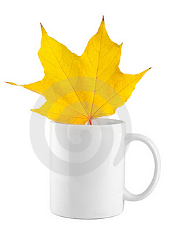 Yellow Maple Leaf In The Cup Stock Photography - Image: 16964842