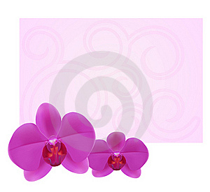 Orchid Card 1-1 Royalty Free Stock Images - Image: 16972349