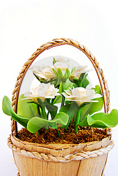 White Flower In Basket On White Background Stock Image - Image: 16974431