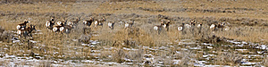 Antelope Running Away Royalty Free Stock Images - Image: 16975709