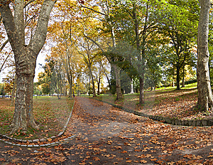 Path Covered With Autumn Leaves Royalty Free Stock Image - Image: 16978156