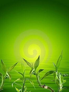 Bamboo Background Stock Photos - Image: 16978383