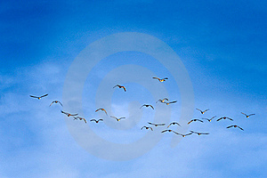 Birds In Flight Stock Images - Image: 16991494